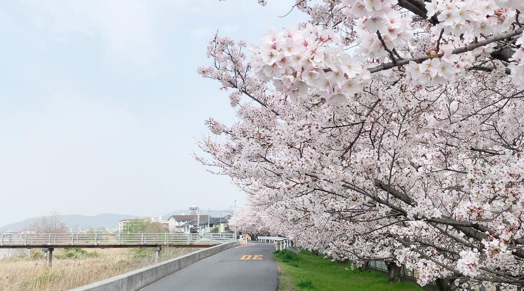 2021年の桜ちゃん